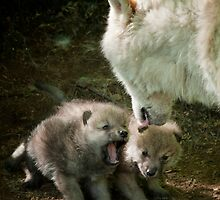 Arctic Wolf With Pup by WolvesOnly