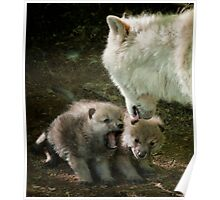Arctic Wolf With Pup Poster