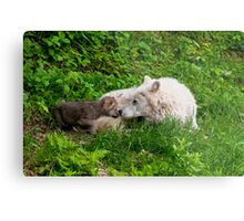 Arctic Wolf And Pups Metal Print