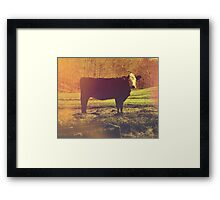 On The Farm - Photography - Nature Photography - Cow Framed Print
