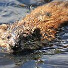 Wet Fur by Kenneth Haley