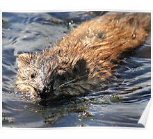 Wet Fur Poster