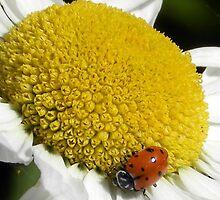 Lovely little ladybug by snhuk