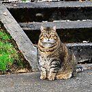 Fat And Happy With Attitude! by Jennifer Hulbert-Hortman