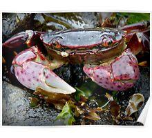 Rock Crab Poster