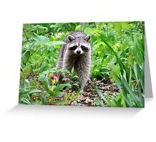 Rainy Day Raccoon Greeting Card
