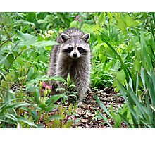 Rainy Day Raccoon Photographic Print