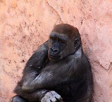 Gorilla by Alyce Taylor