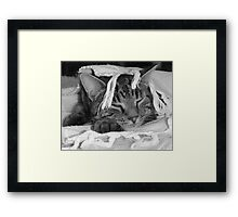Diesel with a fringe on Top! Framed Print
