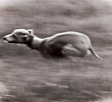 Speed! by LisaRoberts