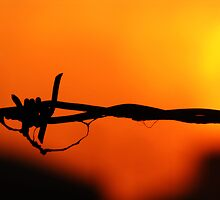 Barbed wire silhouette by Bex Godfrey
