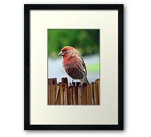 Portrait of a Finch Framed Print