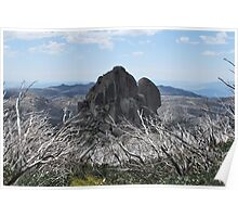Cathedral Rock Admist Burn't Out Trees Poster