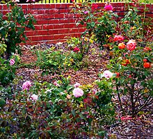 """""""A Brick Wall And Roses Galore"""" by franticflagwave"""