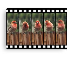 Finch on Film Canvas Print
