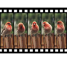 Finch on Film Photographic Print
