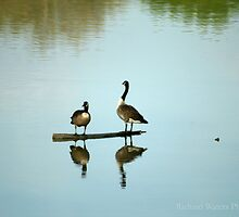 Just Friendly Reflections by RWaters