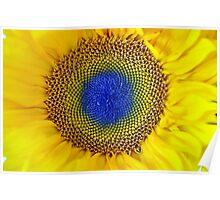Flower of Sun Poster