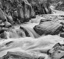 Cascading Colorado Rocky Mountain Stream BW by Bo Insogna