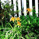 Sunshine Garden by Sunshinesmile83