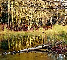 Forest Pond by Gary Rayner