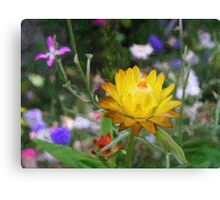 Everlasting flower Canvas Print