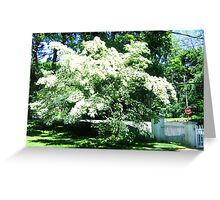 Magnolia Tree Greeting Card
