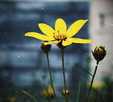 Yellow Flower by meredith brown