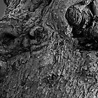 Knotty Tree in B&W by wsteed04