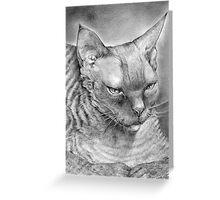 "Ebony (curly kitty)  -  ""Devon Rex"" Greeting Card"