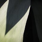 Century Plant Abstract by Tama Blough