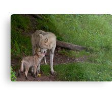 Arctic Wolf And Pup Metal Print