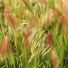 Grasses #2 by trueblvr