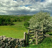 Kissing Gate by Jamie  Green