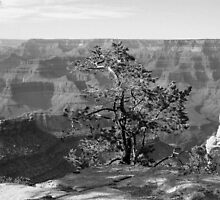 GRAND CANYON sans colour #7 by coffeebean