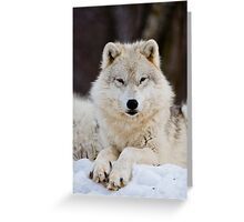 Arctic Wolf Greeting Card