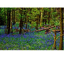 Rhapsody in Blue Photographic Print