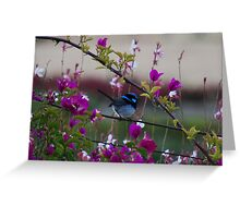 Splendid Fairy Wren Greeting Card