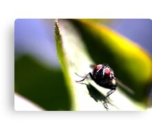 The Eyes of a Fly Canvas Print