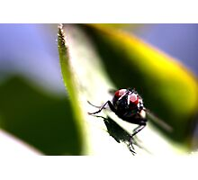 The Eyes of a Fly Photographic Print
