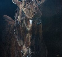 Nervous colt-Millford Fair by Pauline Sharp