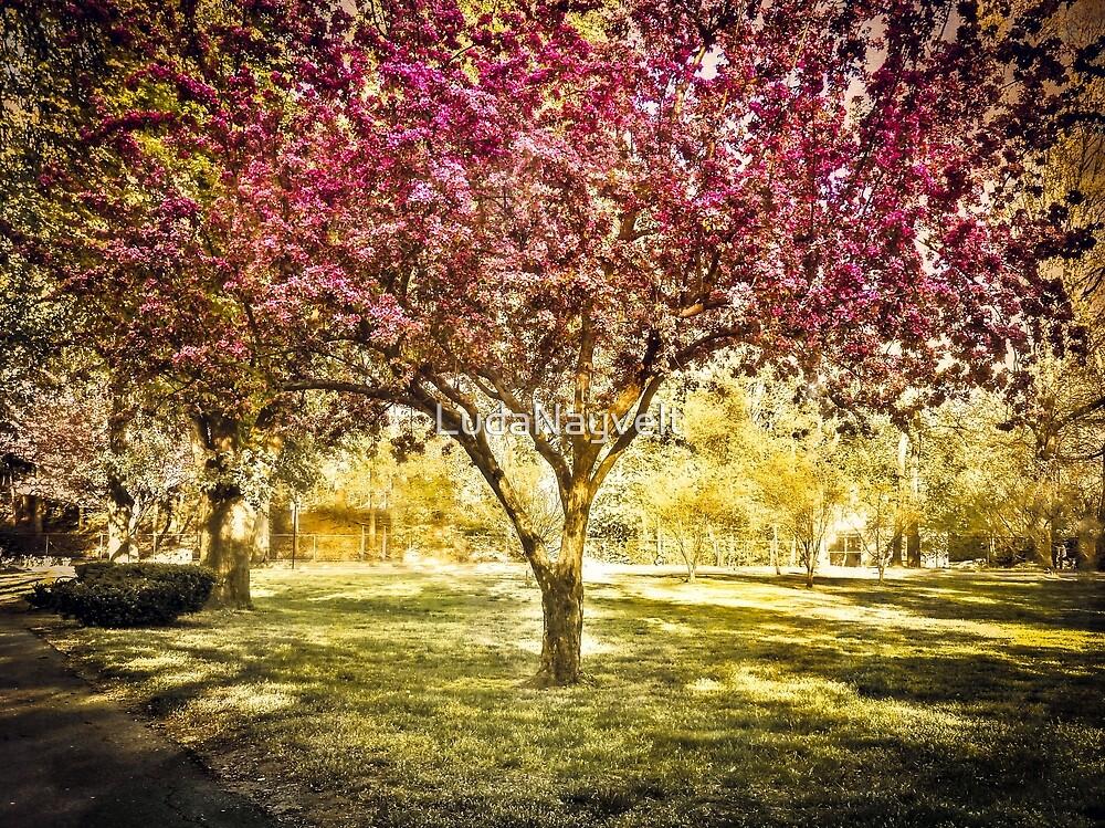 Pink spring tree, Boston MA by LudaNayvelt