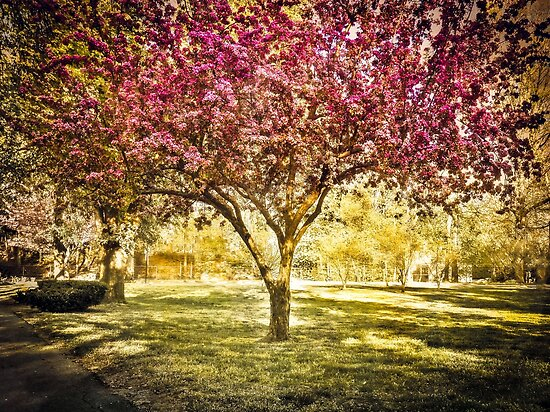 Pink spring tree, Boston MA by LudaNayvelt