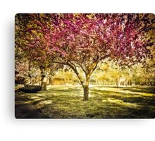 Pink spring tree, Boston MA Canvas Print