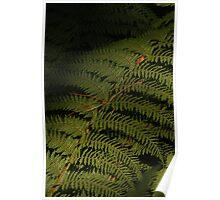 Fern Leaf Poster