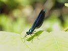 Baby Dragonfly by rhian mountjoy