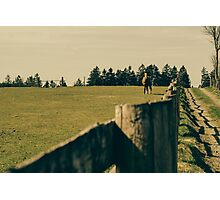 Horse In A Pasture Photographic Print
