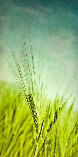 Grain by Priska Wettstein