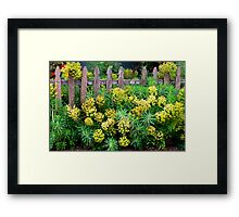 Old Fashioned and Romantic Framed Print