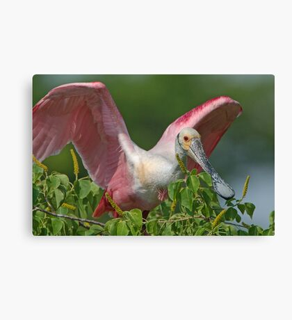Roseate Greetings Canvas Print
